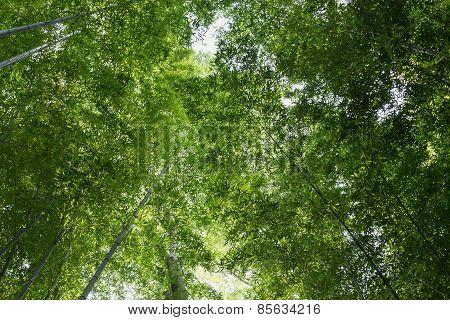 Banbu Forest
