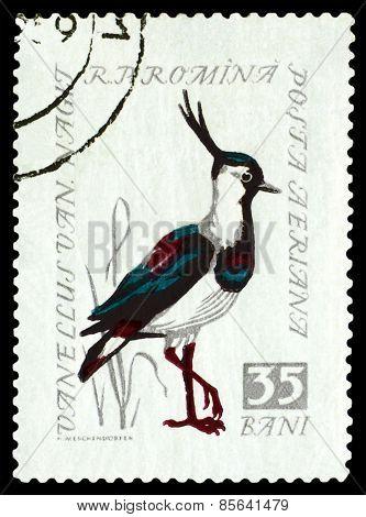 Vintage  Postage Stamp. Northern Lapwing.