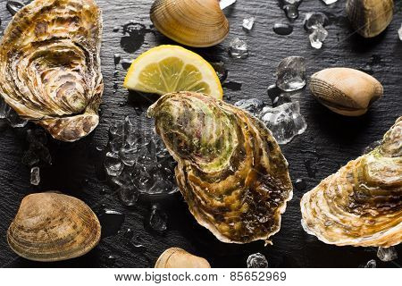 Fresh Oysters And Clams On A Black Stone Plate Top View