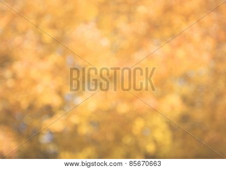 Autumn Background Blur