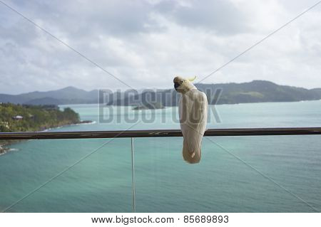 A Parrot Standing On Balcony