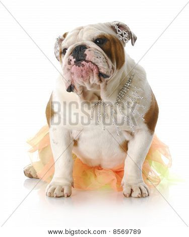 Funny Female Dog