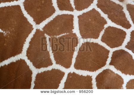 giraffe skin and hair texture animal background poster