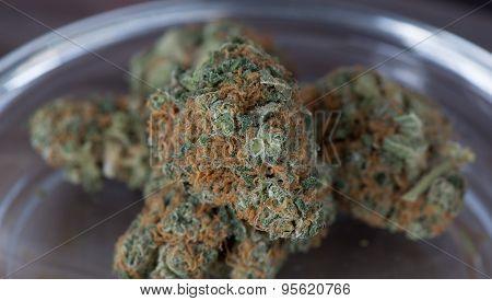 Blueberry Headband Hybrid Medical Marijuana