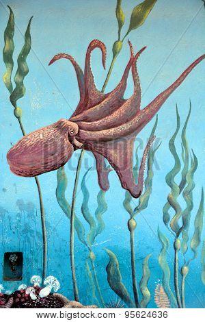 Octopus mura