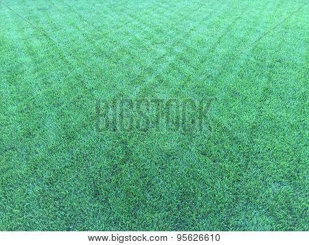 Diamond Pattern Grass