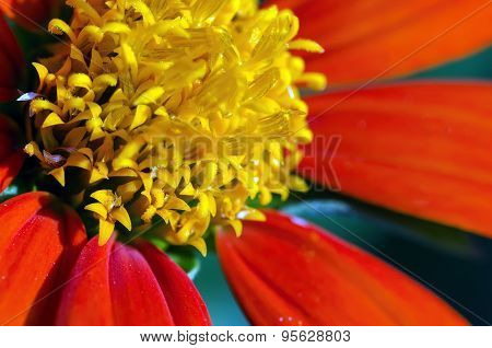 Close Up of A Flower
