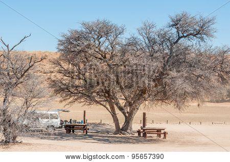 Camel Thorn Tree At The Kamqua Picnic Site