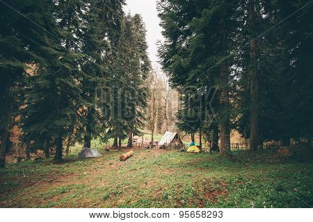 Coniferous Forest with camping Landscape