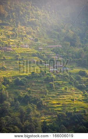 Rice terraces in Annapurna conservation area, Nepal.