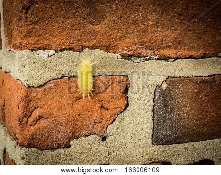 Yellow, fuzzy caterpillar crawling on brick-and-mortar wall