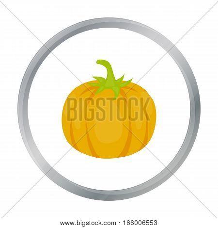 Pumpkin icon cartoon. Singe vegetables icon from the eco food cartoon.