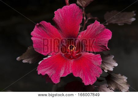 Red Flower with Strange Texture and Yellow Pollen