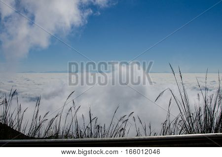 The mist on the mountain at Northen Thailand