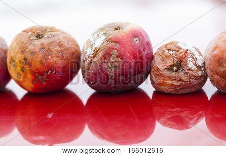 apples rotting bad fruit contrast damaged organic