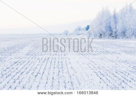 Winter Landscape Field With Trees In Hoarfrost