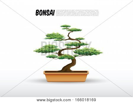 bonsai in the pot japanese style vector