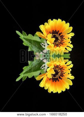 Yellow flower with green leaf isolated on black background