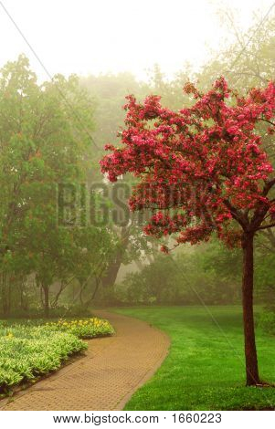 Path in a green foggy park in the spring with blooming apple tree poster