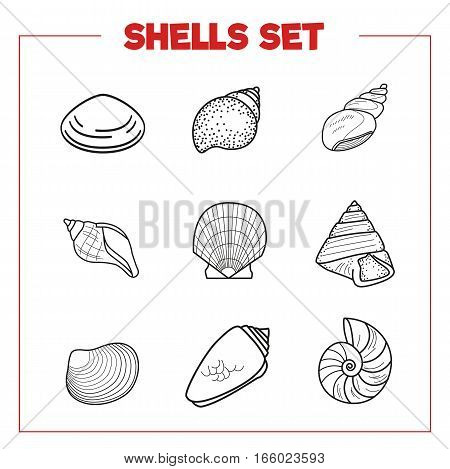 Vector sea conch, shellfish collection. flat style set of conchs and shellfish for prints, advertisement, poster, banner phone case isolated
