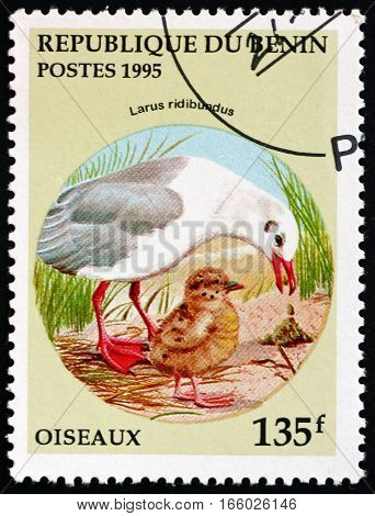 BENIN - CIRCA 1995: a stamp printed in Benin shows the Black-headed Gull Larus Ridibundus Bird circa 1995