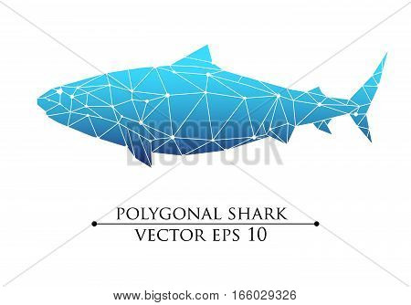 Vector Polygonal big fish, grampus, shark, whale blue with white belly. Web design, page sight, poster banner print, advertisement, element isolated.