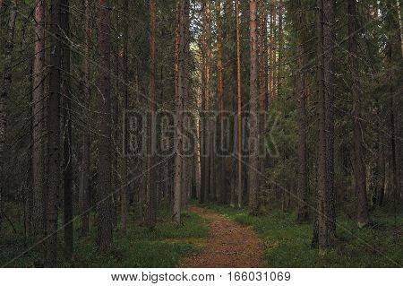 Landscape view. Path deep in primeval  forest