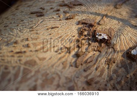 tree bark damaged by a woodworn close up