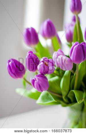 Large beautiful bouquet of purple tulips in a modern interior