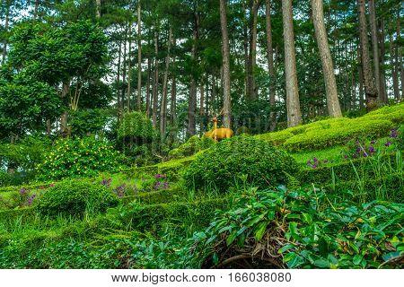 Landscape design of relax tropical summer garden