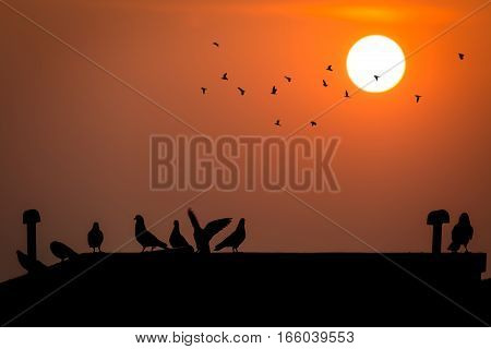 Silhouette sunrise with pigeons sitting on a rooftop.
