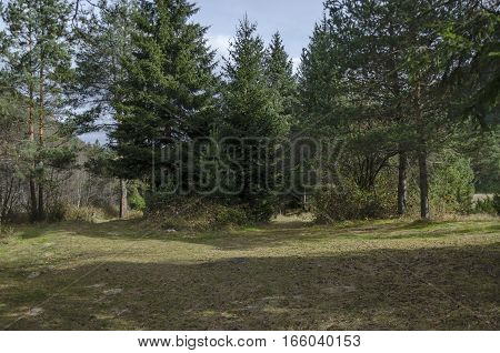 Beautiful view of the  Rila mountain with forest and glade, Bulgaria