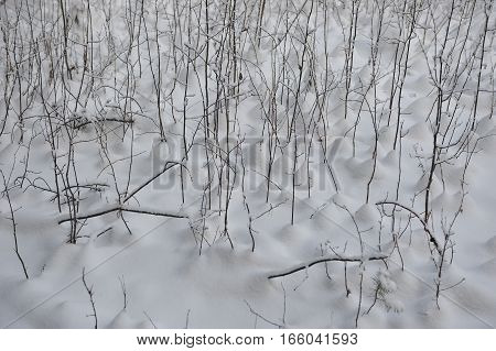 Wintry Background