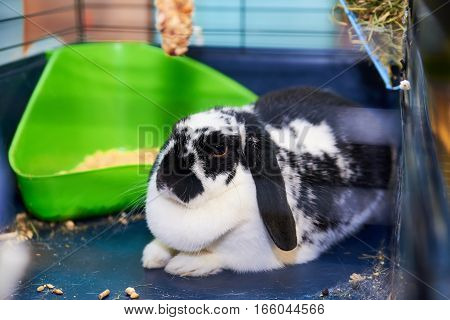 White and brown rabbit in the cage