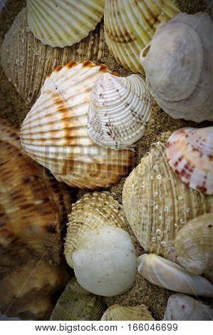 Seashells, Vir island in the northern part of Croatia