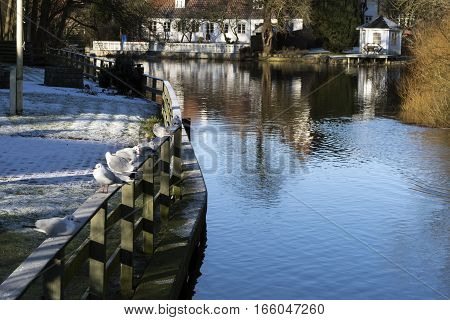 Gulls on a fence in Ribe town close to the river. Denmark.