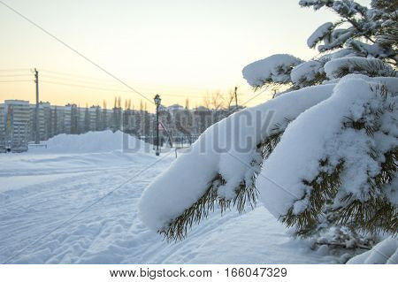 Branch of fir-tree in to snow. Winter sunset is in a park