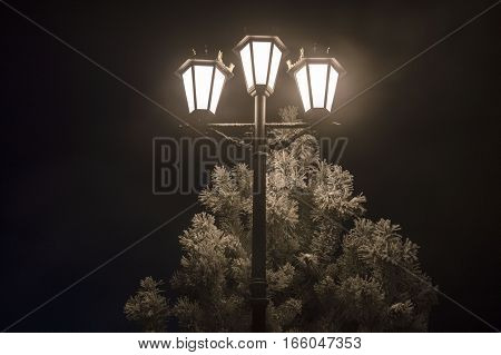 A lamp-post burns in night, in a municipal park
