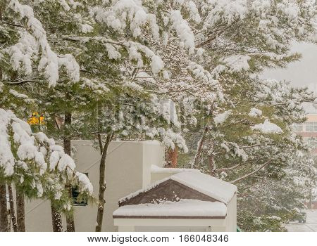 Evergreen trees and the roof of a small shed covered with snow