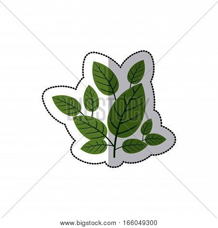 dotted sticker green leaves with ramifications vector illustration