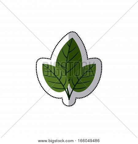 sticker three leaves with ramifications vector illustration