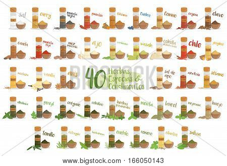 Set of 40 different culinary herbs species and condiments in cartoon style. Spanish names.