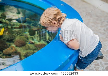 The Boy Looks Into The Pool With The Fishes