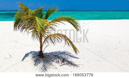 Deserted, sandy beach palm tree in summer.