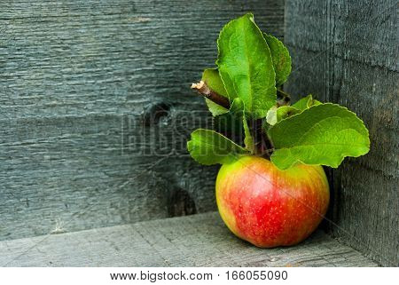 Rich apple with a branch and leaves on a gray background of boards