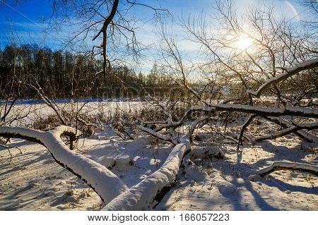 landscape trees covered with snow in the Loshitsa old park manor landscape Minsk Belarus winter