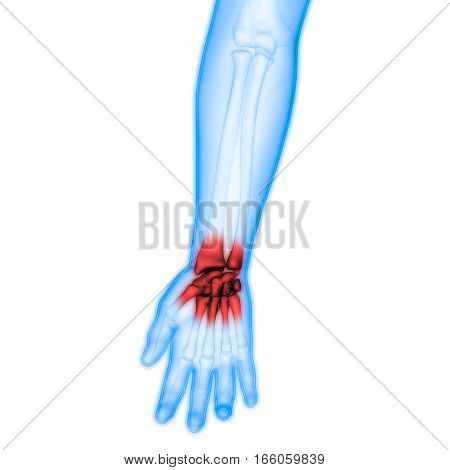 3D Illustration of Human Body Bone Joint Pains Anatomy (Hand Joints)