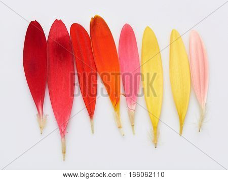 Rainbow palette of flower feathers isolated on white background
