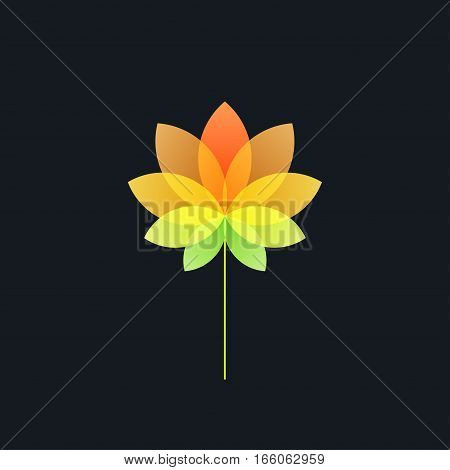 Bright Colorful Translucent Flower on Black Background ,Design Element