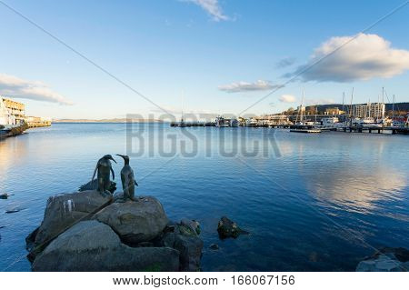 Penguin sculptures sit on rocks in Constitution Dock, Hobart, Tasmania, Australia.